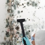 Black-Mold-Remediation-San_Jose