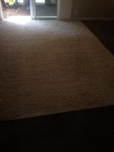 San_Jose-Fleas-Cleaning