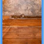 Wall-Mold-Removal-San_Jose